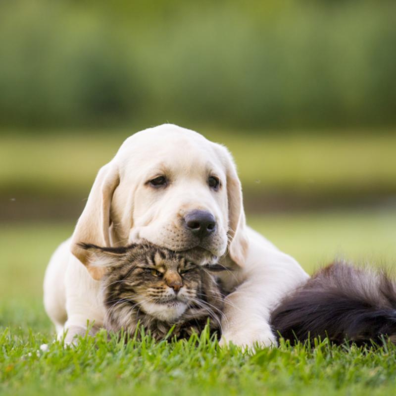 Kat en hond in een gezellige knuffel verstrengeld