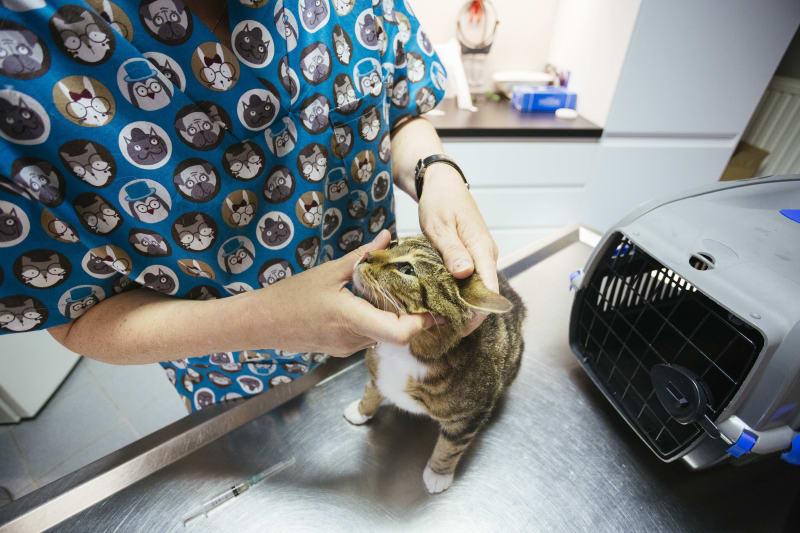 dierenarts met kat
