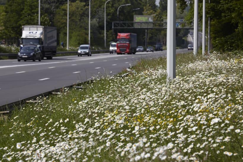 Berm met bloemen langs de snelweg