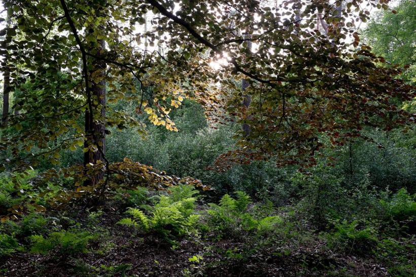 Een zicht in een dicht bos