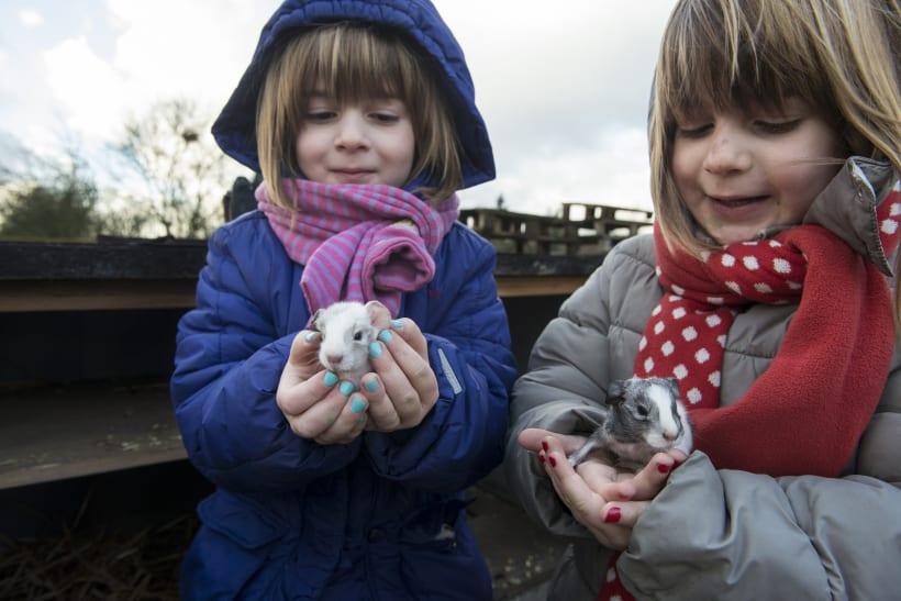 Meisjes houden cavia's in hun handen.