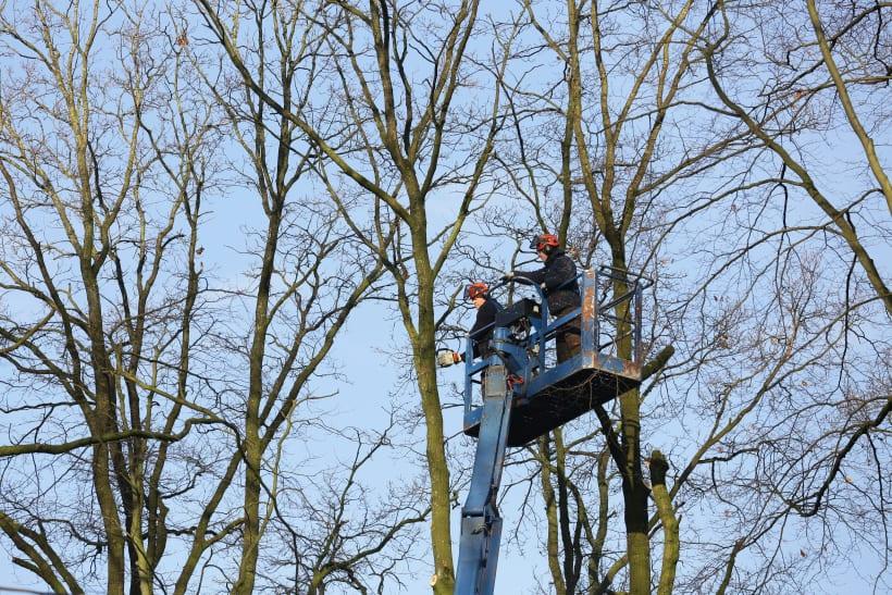 Het rooien en snoeien bomen vanuit een hoogtewerker.