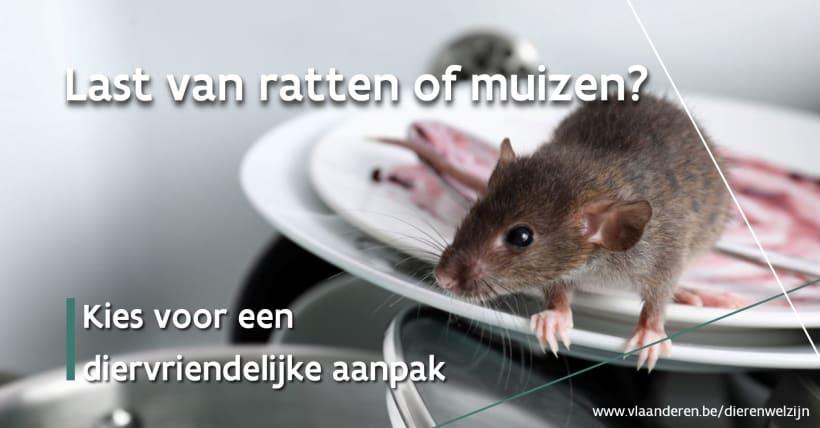 Een muis op een berg afwas met tekst 'Last van ratten of muizen?'. Kies voor een diervriendelijke aanpak