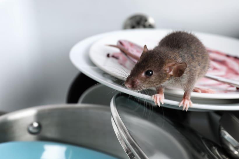 Muis op een stapel afwas in de keuken.