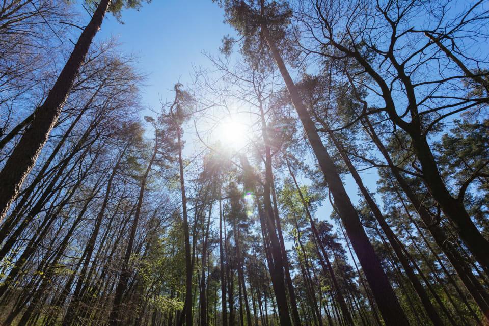De winterzon schijnt doorheen de kale bomen van een bos.