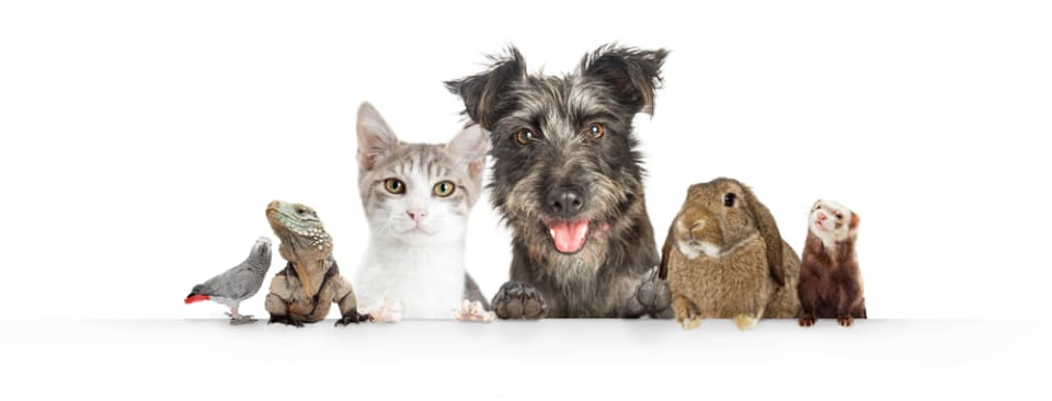 huisdieren op een rijtje